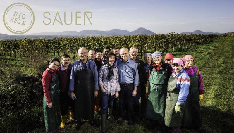 Weingut Sauer in Böchingen